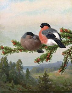 Bullfinches on a branch / Punatulkut oksalla 1891 Ferdinand von Wright Scandinavian Paintings, Wright Brothers, Bullfinch, Ferdinand, Wildlife Art, Golden Age, Finland, Art History, Zero