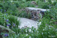 Ecologische bedrijfstuin op industrieterrein- Ecological company garden on industrial area.  Prairie Garden. Locatie: Geelen Counterflow Haelen NL Ontwerp: Iverna Zaalberg Natuur bij huis 2014/2015 Foto: 2017-05 ©Natuurbijhuis