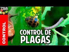 Como cuidar un limonero de las 4 estaciones - Cosas del Jardin Dream Garden, Cilantro, Planters, Youtube, Animals, Gardening, Ideas, Patio, Gardens