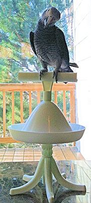 The most versatile bird perch ever!  Take your bird anywhere.  Timmy is smiling on his Percher Stand.