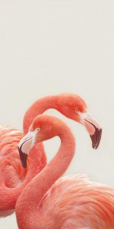 Flamingos White Canvas Artwork by Monika Strigel Flamingo Wallpaper, Flamingo Art, Pink Flamingos, Flamingo Photo, Flamingo Painting, Pretty Birds, Beautiful Birds, Pretty In Pink, Animals Tattoo