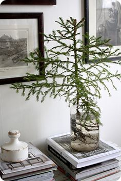 this year i may just scatter lots of pine boughs instead of garish christmas tree.