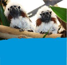 Monkey Animal Exhibit Pet Monkey, Butterfly House, Tropical Birds, Farm Animals, New Zealand, Good Books, Creatures, Exhibit, Fun