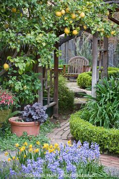 Citrus growing on arbor trellis over path leading to secret garden