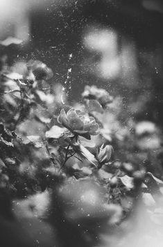 """ᵩ""""It's been an ugly day"""", she said. """"Tell me something beautiful?"""" And he said her name. ~Unknown"""