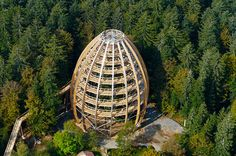 The world's tallest tree to observation structure in Bavarian Forest National Park in Neuschonau, Germany