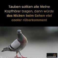 Tauben und Kopfhörer