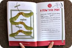 52- A Few Seed Pods in The Pocket Scavenger by Keri Smith