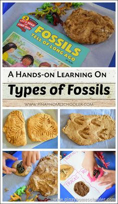 Hands-on Learning on the Types of Fossils Science Fair Projects, Science Experiments Kids, Science Lessons, Science For Kids, Science Activities, Activities For Kids, Earth Science, Teaching Science, School Projects