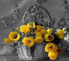 Spring_flowers ✽~ੴ●•٠·