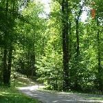 Once again -- go to the national park website for real information (just won't pin).  Stay in the park. RVers, we love Cosby, Cades Cove and Smokemont -- really feel a part of the mountains.  Those with tent or smaller units consider Catalouchi -- AMAZING but the road in is not the faint of heart!
