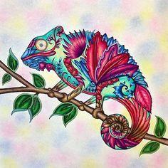 Chameleon!                                                                                                                                                     More