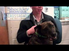 Pet of the Week - March 6, 2012 - Willow  http://www.youtube.com/playlist?list=PL389D318097C2A56D=plcp