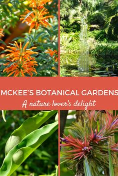 Enjoy a dose of nature and gorgeous grounds to walk around on at McKee's Botanical Gardens in sunny Vero Beach, Fl.