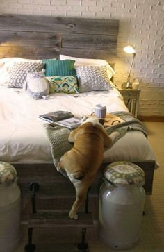 Ah, breakfast in bed #caninecommunityreporters