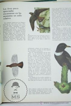 Libros de segunda mano: Libro Naturalia. Enciclopedia Ecológica Ciencias Naturales. Vol IV. Fauna Montañas... - Codex,1965 - Foto 6 - 50515400