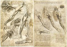 Leonardo+da+Vinci+Tutt%27Art%40+%2B+%284%29.jpg (1181×837)