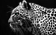 1920x1200 px Full size leopard image by Crockett Backer for  - pocketfullofgrace.com