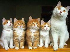 Mum and kids...