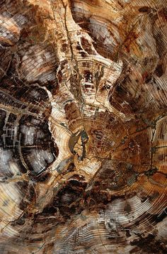 Petrified wood heals relationships of non repairable nature that are not of earth. As the person who has been hurt or neglected you has passed. Petrified wood helps recall memories of deceased relations who found it hard to express emotions.