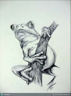 frog #Creative #Art #Sketching @touchtalent.com