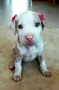 Precious angel baby with her cuteness & pink bows!