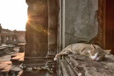 Temple Cat - A temple cat in Siem Reap Cambodia taking a nap as the sun sets.