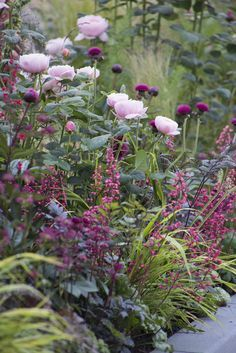 A moodier palette. Pink roses, purple thistles, dark-leaved Actea and Heuchera with variegated grasses.