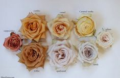 We partnered with Alicia Schwede of on her latest Beige to Brown Rose Color Study featuring 12 varieties that fall into that… Rose Flower Colors, Colorful Flowers, Beautiful Flowers, Brown Flowers, Exotic Flowers, Purple Flowers, Spring Flowers, Toffee, Rose Wedding