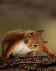 La nature - Eichhörnchen & Co. Cute Funny Animals, Cute Baby Animals, Nature Animals, Animals And Pets, Wild Animals, Wildlife Nature, Beautiful Creatures, Animals Beautiful, Cute Squirrel