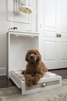 (paid link) DIY Dog Crate Plans: Plans For Your Pup's Custom Kennel. #diydogcrate Diy Dog Bed, Cool Dog Beds, Diy Bed, Cute Puppies Images, Puppy Images, Diy Dog Crate, Modern Murphy Beds, Cute Bedding, Bedding Sets