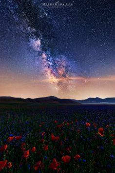 Flowering stars, by Mauro Cirigliano....