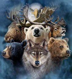 Animaux - Plusieurs animaux