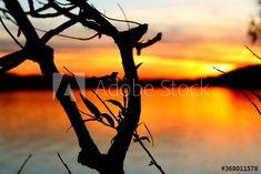 Sunset behind silhouette of house – kaufen Sie dieses Foto und finden Sie ähnliche Bilder auf Adobe Stock | Adobe Stock Silhouette, Celestial, Sunset, Photography, Outdoor, Image, Pictures, Outdoors, Photograph