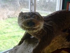 you were once an otter.