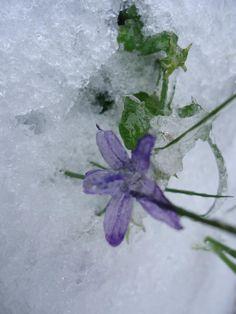 Het eenzame bloemetje