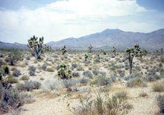Mojave Desert. Photo credit: http://www.cas.vanderbilt.edu/bioimages/ecoregions/51308frame.htm
