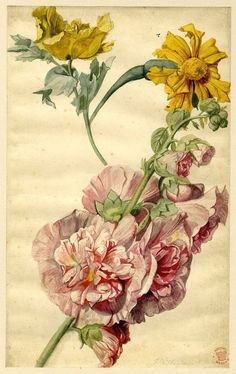 Flower study by Jan van Huysum. Watercolour, partly strengthened with gum