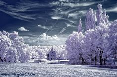 Tree photographs are by popular photographers across the globe with great expertise. Tree photography is a major section of photography under nature photography. Infrared Photography, Tree Photography, Winter Photography, Beautiful World, Beautiful Places, Tree Story, Espanto, Fantasy Forest, Winter Magic