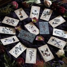 A botanical Oracle deck rooted in mythology and infused with plant magic, the Pythia Botanica offers 48 hand-illustrated cards by Nicole Rallis of Leila + Olive. Hand Illustration, Botanical Illustration, Wiccan, Magick, Witchcraft, Coven, Oracle Of Delphi, Images Esthétiques, Maleficarum