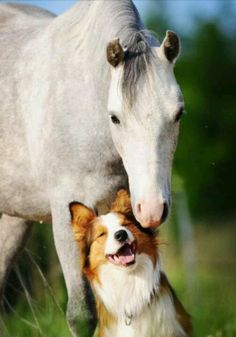 Horses and dogs