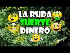 Como Tener Suerte, Dinero, Amor, Trabajo, Eliminar Hechizos, Brujerías, CON BAÑOS DE RUDA, LIMPIA - YouTube