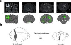 Figure 1 Nature Research, Visual Cortex, Scientific Reports, Article Search, Career Development
