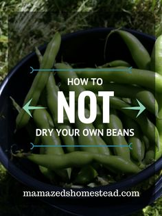 How not to? What sort of a DIY post is that?! Trust me, you learn just as much from your mistakes as you do from your successes. I successfully learned how NOT to dry beans this week. While I am still mourning my loss, I'm writing it down as a learning experience. A little … Growing Seedlings, Write It Down, Food Storage, Green Beans, Vegetables, Learning, Mistakes, Garden Ideas, Trust