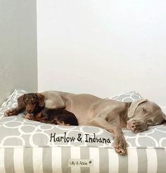 Harlow & Sage (Indiana) enjoying their Lilly & Abbie bed.