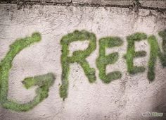Imagen titulada Make Moss Graffiti Step 8revised