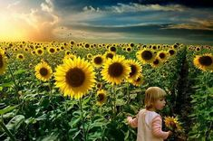 As a child I had a recurring dream of being in a tuscan sunflower field and strolling aimlessly along. Sometimes I was with friends joking and playing. Other times I was alone. The main thing I remember were the sunflowers towering over me. Sunflower Garden, Sunflower Design, Sunflower Fields, Sunflower Photography, Baby Girl Photography, Art Photography, Recurring Dreams, Sunflower Pictures, Sister Pictures