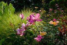 Rosa   Flickr – Condivisione di foto!