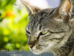 Cat Stare by Amit Kaushal on 500px