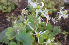 RHS advice & tips on garden & indoor plants | Plant finder & selector / RHS Gardening